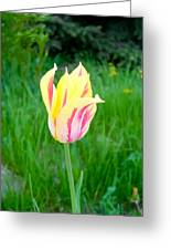 Pretty Pastel Tulip Greeting Card