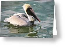 Pretty Pelican In Pond Greeting Card