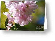 Pretty Pink Cherry Blossoms Greeting Card