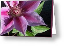 Pretty Pink Clematis Greeting Card