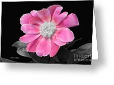 Pretty Pink Petals  Greeting Card