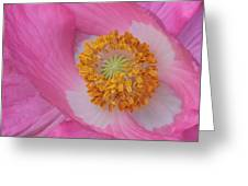 Pretty Pink Poppy Macro Square Greeting Card
