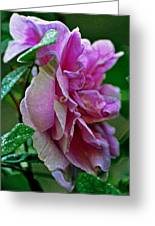 Pretty Pink Rose Greeting Card