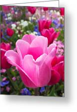 Pretty Pink Tulip And Field With Flowers And Tulips Greeting Card