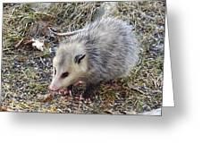 Pretty Possum Greeting Card