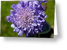 Pretty Purple Flower Greeting Card