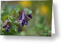 Pretty Purple Flowers In Ireland Greeting Card