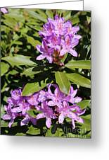 Pretty Purple Rhododendron Greeting Card