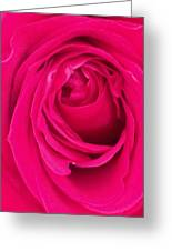 Pretty Red Rose  Greeting Card