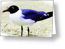 Pretty Swallow Greeting Card