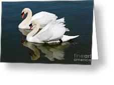 Pretty Swan Pair Greeting Card