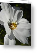 Pretty White Cosmos Greeting Card
