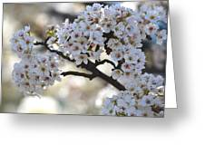 Pretty White Flowering Tree Flowers Greeting Card