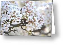 Pretty White Flowering Tree In Spring Greeting Card