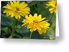 Pretty Yellow False Sunflowers In Bloom Greeting Card