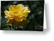 Pretty Yellow Rose Blossom Greeting Card