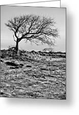 Prevailing Bw Greeting Card by JC Findley