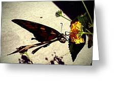 Prey The Yellow Flower Greeting Card