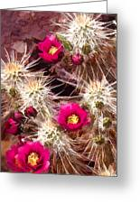 Prickley Cactus Plants Greeting Card
