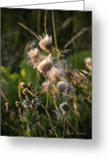 Prickly Beauty Greeting Card