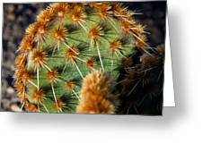 Prickly Cactus Leaf Green Brown Plant Fine Art Photography Print  Greeting Card