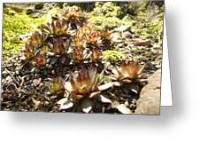 Prickly Lilies Greeting Card