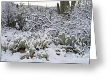 Prickly Pear And Saguaro Cacti Greeting Card