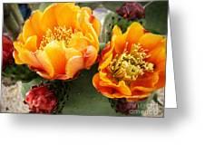 Prickly Pear Blossom Orange Greeting Card