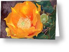 Prickly Pear Blossom Greeting Card