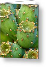 Prickly Pear Cactus 2am-105306 Greeting Card