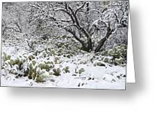 Prickly Pear Cactus And Mesquite Tree Greeting Card