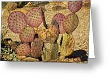 Prickly Pear Cactus Dsc08545 Greeting Card