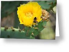 Cedar Park Texas Prickly Pear Cactus In Flower Greeting Card