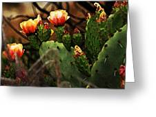 Prickly Pear In Bloom Greeting Card