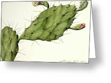 Prickly Pear (opunita Fiscus-indica) Greeting Card