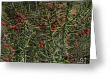 Prickly Pete Cactus Greeting Card