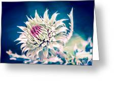 Prickly Thistle Bloom Greeting Card