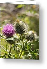 Prickly Youth Greeting Card