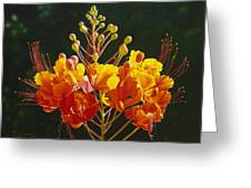 Pride Of Barbados Greeting Card