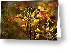 Pride Of Barbados Greeting Card