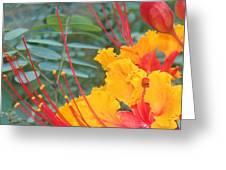 Pride Of Barbados Photo Greeting Card