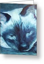 Prima Donna, Cat Greeting Card