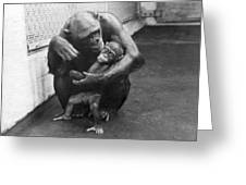 Primate Discipline Greeting Card