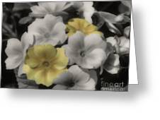 Primrose Flowers Greeting Card
