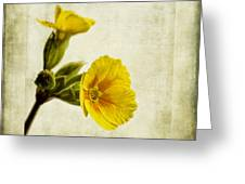 Primula Pacific Giant Yellow Greeting Card