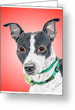 Princess - A Former Shelter Sweetie Greeting Card