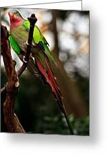 Princess Parrot On A Tree. Greeting Card