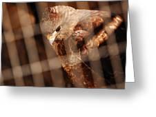 Prisoner Hawk  Greeting Card