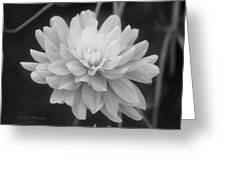Prissy In Black And White Greeting Card