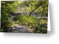 Pristine Forest Stream Greeting Card